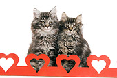 CAT 03 JE0038 01