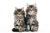 CAT 03 JE0039 01