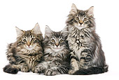 CAT 03 JE0040 01