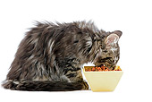 CAT 03 JE0041 01