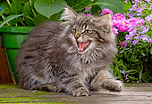 CAT 03 JE0045 01