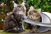 CAT 03 JE0049 01