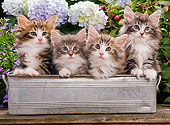 CAT 03 JE0052 01