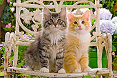 CAT 03 JE0053 01