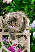 CAT 03 JE0058 01