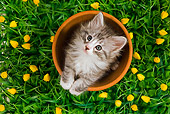 CAT 03 JE0060 01