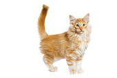 CAT 03 JE0068 01