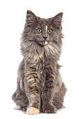 CAT 03 JE0071 01