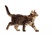CAT 03 JE0074 01