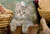CAT 03 JE0090 01