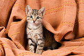 CAT 03 JE0093 01