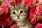 CAT 03 JE0095 01