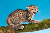 CAT 03 JE0097 01