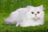 CAT 03 JE0105 01