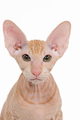 CAT 03 JE0118 01