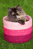CAT 03 JE0120 01