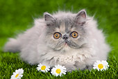 CAT 03 JE0121 01