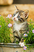 CAT 03 JE0126 01