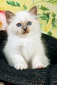 CAT 03 JE0129 01