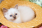 CAT 03 JE0139 01