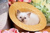 CAT 03 JE0140 01