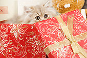 CAT 03 JE0147 01