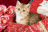 CAT 03 JE0152 01