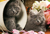 CAT 03 JE0153 01