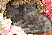 CAT 03 JE0154 01