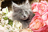CAT 03 JE0156 01