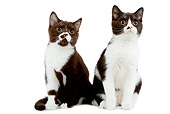 CAT 03 JE0158 01