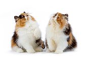 CAT 03 JE0159 01