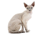 CAT 03 JE0161 01