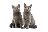 CAT 03 JE0164 01