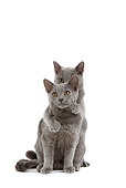 CAT 03 JE0165 01