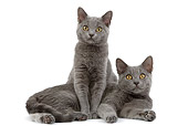 CAT 03 JE0166 01