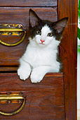 CAT 03 JE0168 01