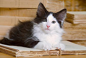 CAT 03 JE0170 01