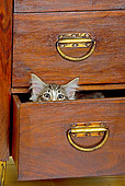 CAT 03 JE0172 01