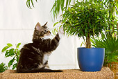 CAT 03 JE0173 01