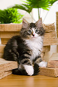 CAT 03 JE0174 01