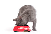 CAT 03 JE0179 01