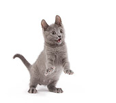 CAT 03 JE0180 01