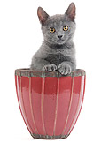 CAT 03 JE0181 01