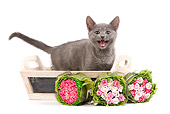CAT 03 JE0184 01