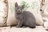 CAT 03 JE0189 01