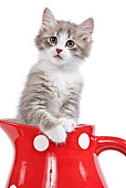 CAT 03 JE0193 01