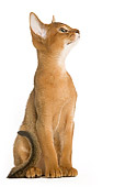 CAT 03 JE0197 01