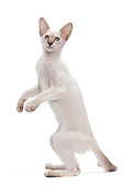 CAT 03 JE0210 01