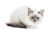 CAT 03 JE0212 01